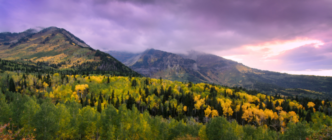 A stormy sky above a forest of trees changing yellow, with mountains in the distance.