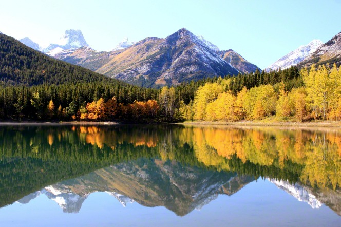 Snowy mountains behind a forest of evergreens and quaking aspens with yellow and orange leaves, reflected in the lake at Banff National Park in Alberta, Canada, in autumn.