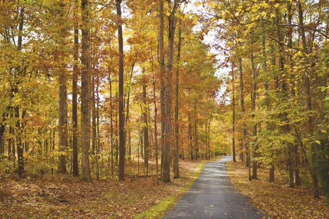 Tall trees with yellow, orange, and green leaves on both sides of a paved path in Georgia.