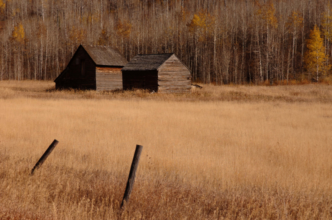 Two old wooden cabins in a field in front of a forest of aspen trees with sparse yellow leaves, with two old fence posts in the foreground.