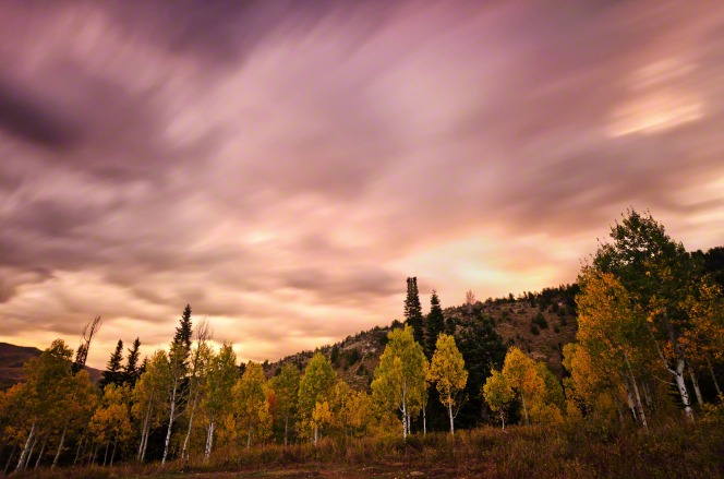Pine and quaking aspen trees with green and yellow leaves on a mountainside under a cloudy sunset.