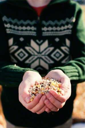 A little boy in a green sweater standing and holding out his hands full of grain.