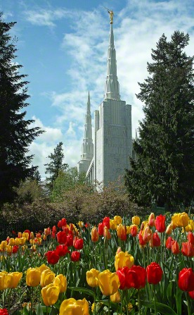 A partial view of the spires of the Portland Oregon Temple, with blooming tulips in the foreground and trees in the background.
