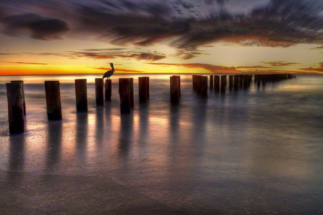 A sunset behind a bird perched on an old wooden pier.