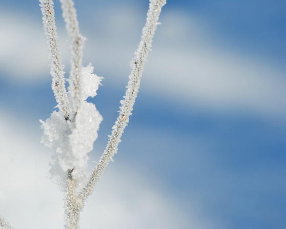 A cluster of small branches covered in frost.
