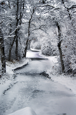 A path lined with trees, covered in ice and snow in the winter.