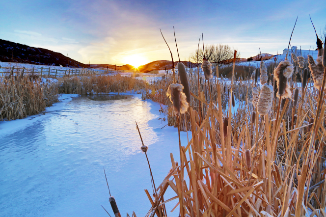 Cattails covered in snow surround a frozen pond, with the sun setting in the background.