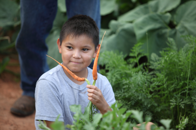 A young boy sits on the ground in a vegetable garden and holds two orange carrots.