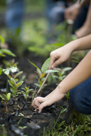 A row of hands planting seeds and caring for young leafy plants in a garden.