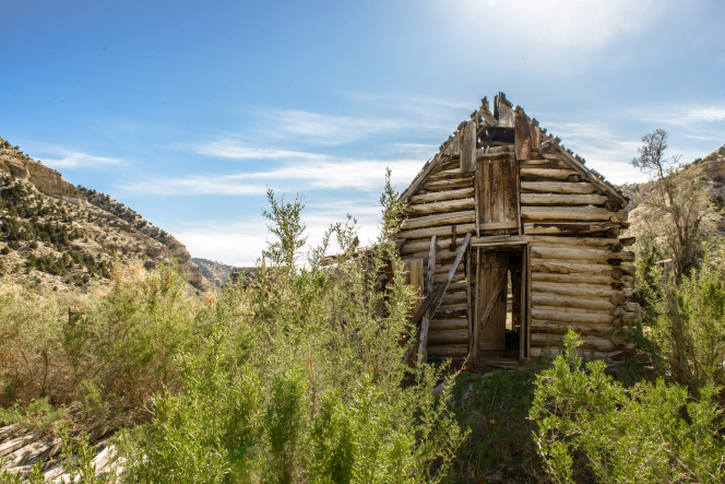 An old, broken-down log cabin on a mountain with overgrown desert plants surrounding it.