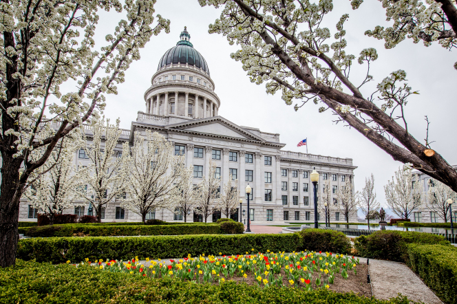 A view of the Utah State Capitol on a gray spring day, seen between the branches of two trees covered with white blossoms.