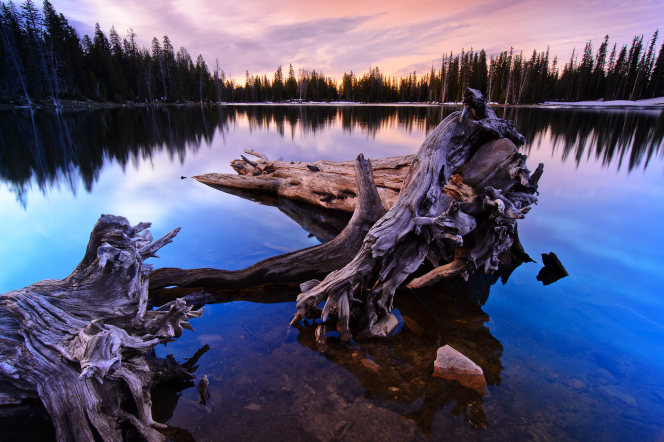 An image of large driftwood sitting in Crystal Lake, with the water reflecting the surrounding trees and sunrise.