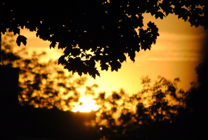 Leaves from a tree are silhouetted by the setting sun.