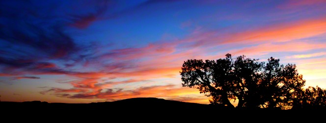 A large tree is silhouetted by the sunset, which is pink, purple, and blue.