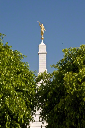 An image of the statue of the angel Moroni on the Oaxaca Mexico Temple, seen rising above the green leaves of trees in the foreground.
