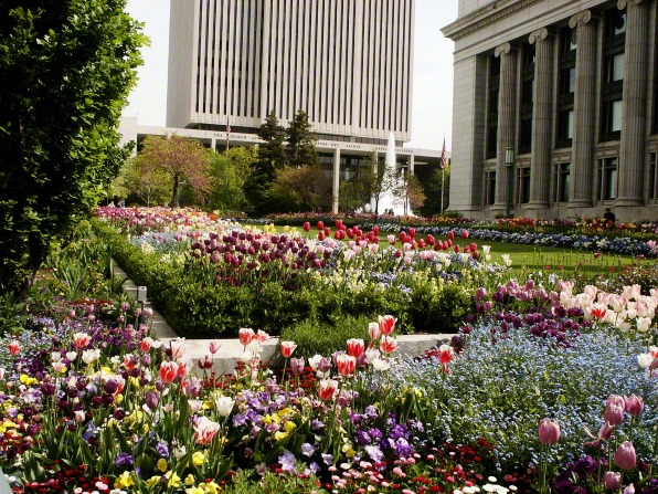 The grounds next to the Church Administration Building filled with red, pink, and purple flowers, mostly tulips, with the Church Office Building seen in the background.
