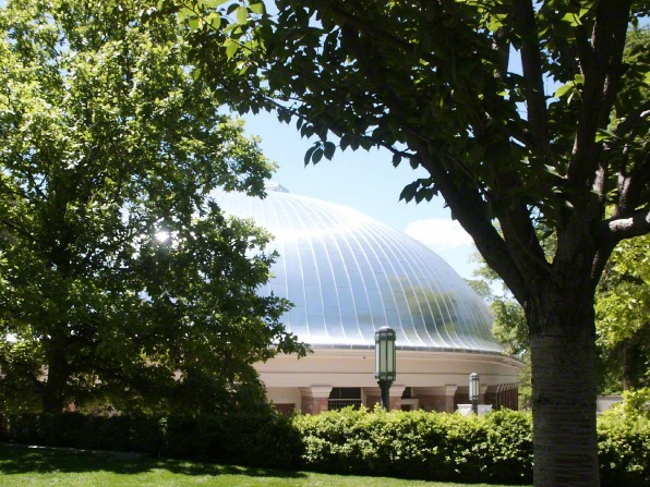 The roof of the Salt Lake Tabernacle seen between the branches of green trees on the grounds.