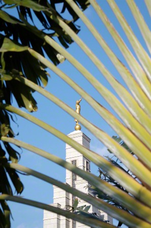 A view of the spire on the Accra Ghana Temple through some of the palm leaves on the grounds.