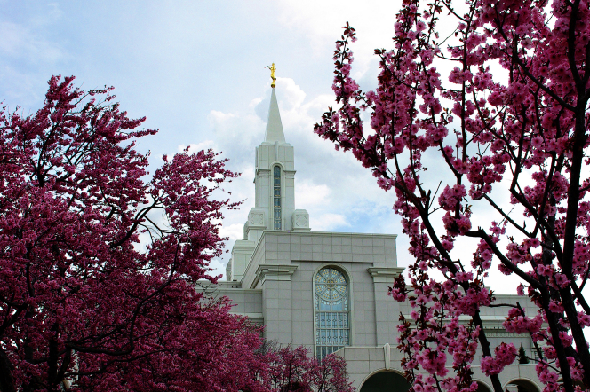 The front of the Bountiful Utah Temple, seen between tree branches with pink blossoms.