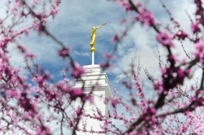 The spire and the angel Moroni on the Colonia Juárez Chihuahua Mexico Temple rising behind light purple tree blossoms.