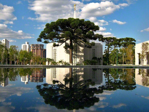 A large tree growing in front of the Curitiba Brazil Temple, reflected in a pool of water below.