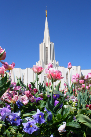 The flowers on the grounds of the Jordan River Utah Temple on a spring day, with the temple's spire rising over the flowers against a clear blue sky.