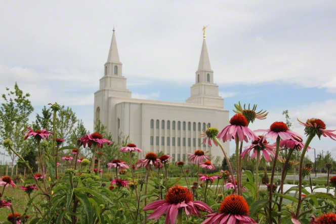 Some pink flowers on the grounds of the Kansas City Missouri Temple on a sunny day, with the temple in the background.