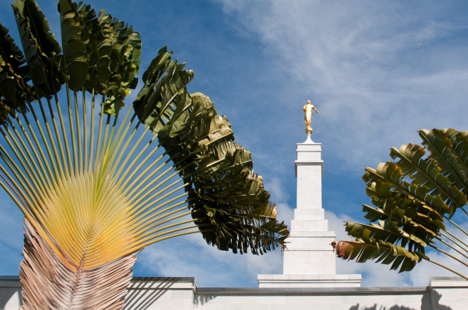 The spire of the Kona Hawaii Temple, with the angel Moroni showing between the leaves of the native plants that are found on the temple grounds.