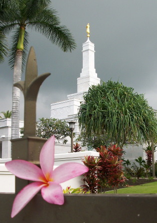A pink flower on the fence at the Kona Hawaii Temple, with the temple seen in the background.
