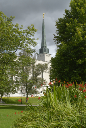 The spire of the London England Temple, seen between two trees on the temple grounds, with a flowering bush in the foreground.