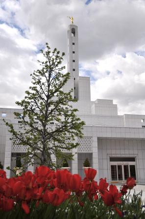 A springtime view of the Madrid Spain Temple and its spire with the angel Moroni on top, with red flowers and a tree in the foreground.
