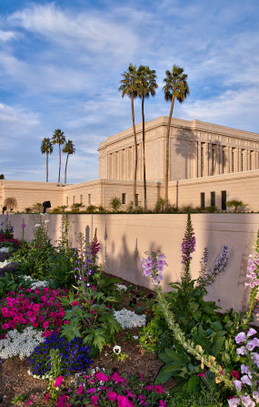 The Mesa Arizona Temple landscape in the daytime, with a close-up view of flowers and the temple and palm trees behind.