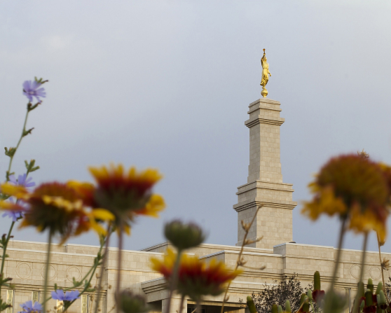 The spire with the angel Moroni on top of the Monticello Utah Temple is viewed between flowers in the daytime.