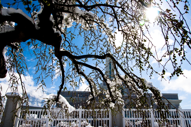 The Mount Timpanogos Utah Temple and the temple fence, seen between the snow-covered branches of a tree in the winter.