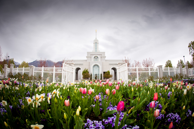 A wide-angle image of the tulips and other spring flowers in front of the Mount Timpanogos Utah Temple, which is seen through an open gate.