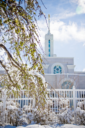The snow-covered branches of a tree outside of the Mount Timpanogos Utah Temple, which is seen over to the right of the image.