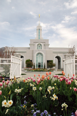 The tulips and other spring flowers in front of the Mount Timpanogos Utah Temple, with the temple seen through the open gate on the white fence.