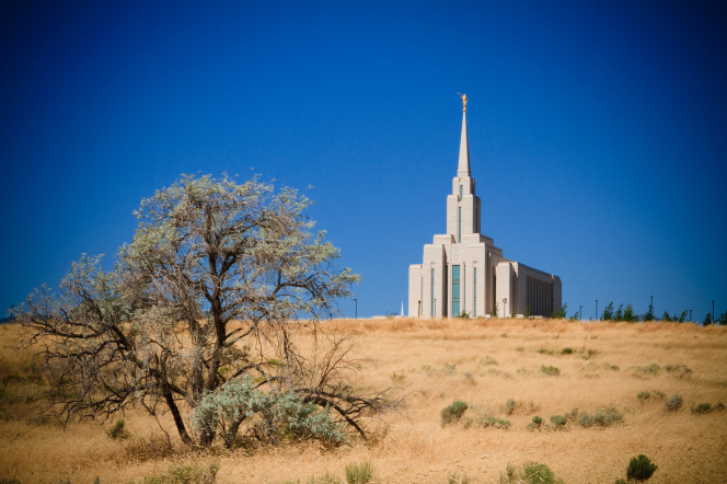 A view from afar of the Oquirrh Mountain Utah Temple, seen above a hill of golden grass, with a large bare tree in the foreground.
