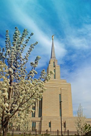 A side view of the front of the Oquirrh Mountain Utah Temple and spire, with a blossoming tree on the left.