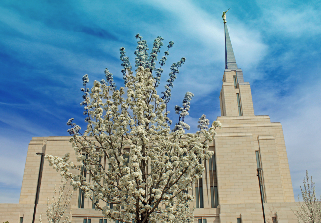 A small tree on the grounds of the Oquirrh Mountain Utah Temple covered with white spring blossoms, with the side of the temple seen in the background.