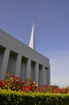 A side view of the Preston England Temple behind a row of red roses, with the temple's spire in view.