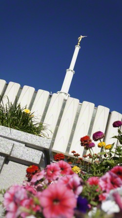 An image of the Provo Utah Temple on a clear, sunny day, taken at an angle, with colorful flowers in the foreground.