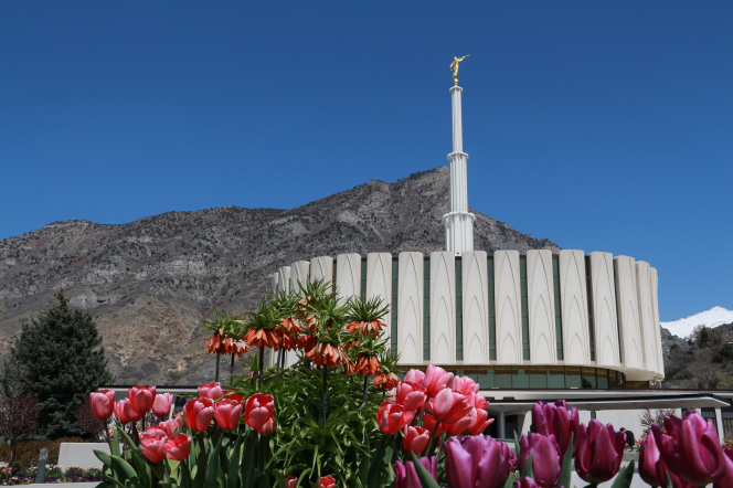 The entire Provo Utah Temple, with a view of flowers in the foreground and the mountains in the background.