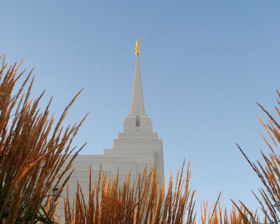 A view of the Rexburg Idaho Temple spire, with tall grass framing the image.