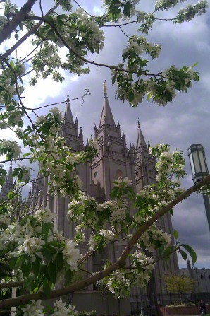Three spires of the Salt Lake Temple, viewed through branches of flowering trees.