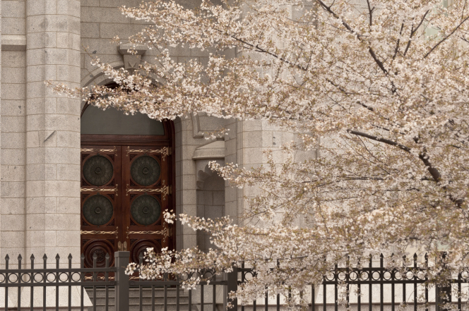 The doors of the Salt Lake Temple, with a flowering tree on the temple grounds in the foreground.