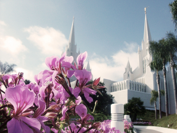 Flowers blooming on the grounds of the San Diego California Temple, with a view of the temple in the background.