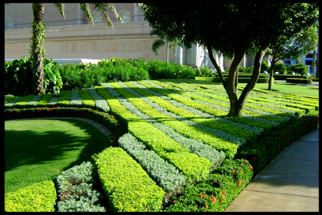 The bushes on the grounds of the Santo Domingo Dominican Republic Temple.