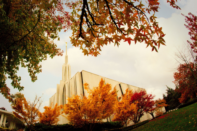 An upward view of the Seattle Washington Temple, partially covered by trees on the grounds changing colors in autumn.
