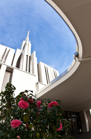 An upward view of the Seattle Washington Temple spire, with a bush of roses at the bottom.